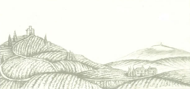 vineyard_drawing